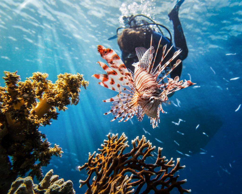 La mer rouge pour pratiquer la plongée en Egypte